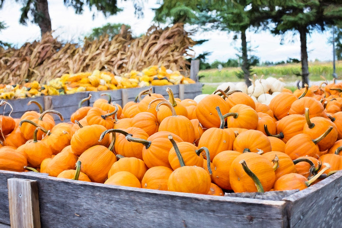 25 Super Interesting Facts About Pumpkins