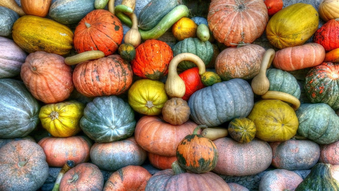 Best Pumpkin Festivals in the US