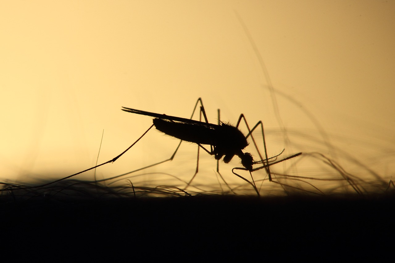 Keep Mosquitoes Away With These Homemade Repellent Ideas