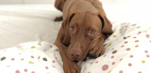 Buying A Bed For Your Dog – Simple Steps You Should Closely Follow