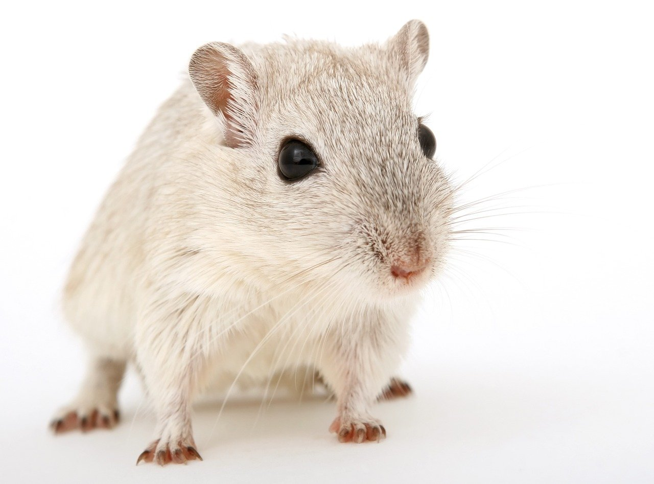 Why You Should Start Looking For A Reliable Pest Control Expert ASAP
