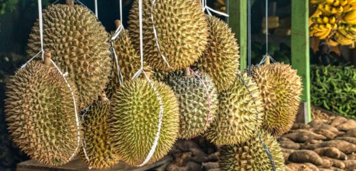 Tips and Recommendations on Buying Freshly-Harvested Durian – An Overview