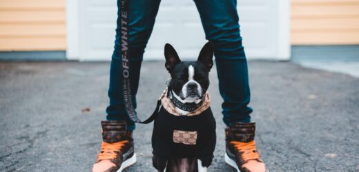 Crucial Things to Remember About Your French Bulldog's Health – An Overview