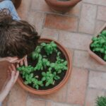 Must-Know Recommendations on Building a Lovely and Abundant Garden at Home